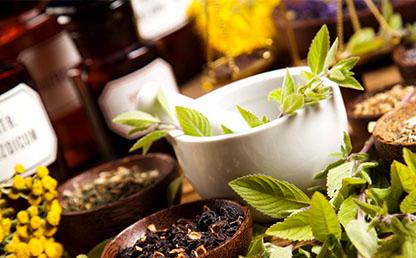 Foto de plantas medicinales