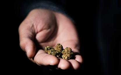 Mano con esferas de marihuana