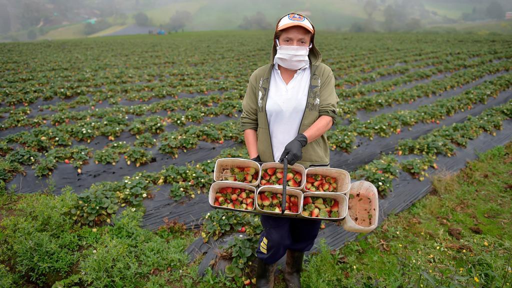 Mujer sostiene en sus manos un canasto con su cultivo.
