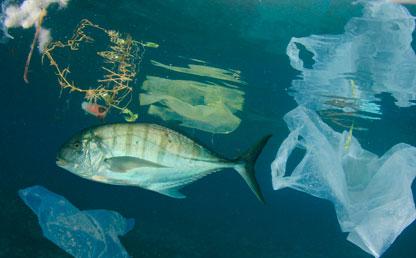 Imagen de un pez en el agua con bolsas plásticsa