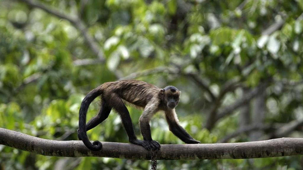 Imagen de un mono en la selva
