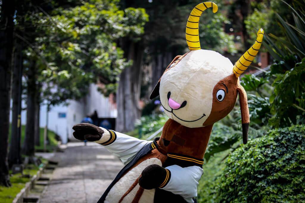 Séneca, la cabra, en la Universidad de los Andes