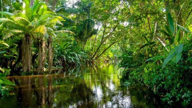 Foto de bosque en el Amazonas