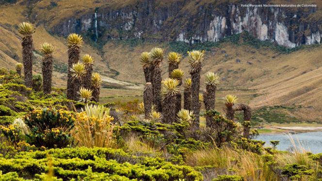 plantas del Parque Nacional Natural Los Nevados