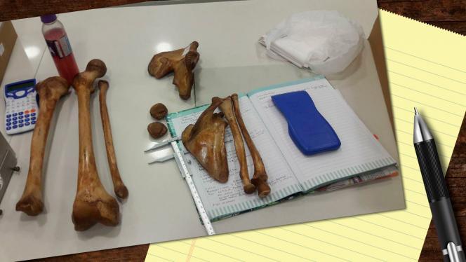 Huesos y muestras de excavaciones realizadas previamente