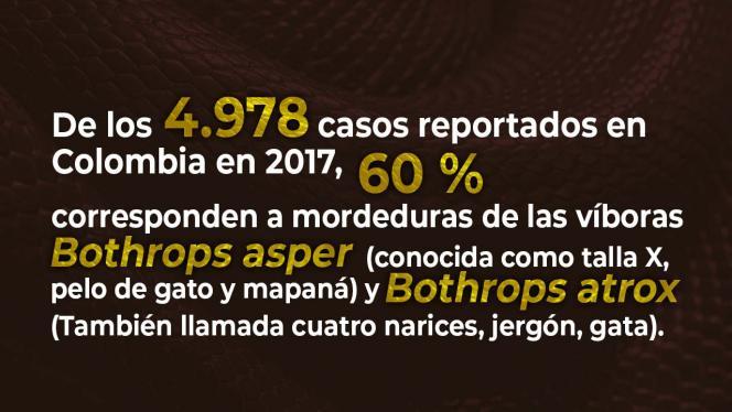Infografía sobre casos reportados en Colombia en 2017 por mordeduras de víboras