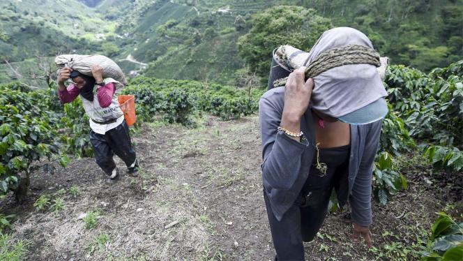 Dos mujeres con bultos de café en los hombros