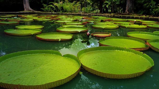 Imagen de plantas acuáticas