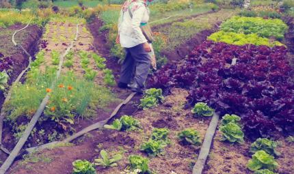 Vivero en el que aparece un cultivador regando las plántulas.