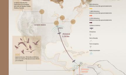 Infografía del trayecto que realizan las aves migratorias entre Sur América y Estados Unidos.