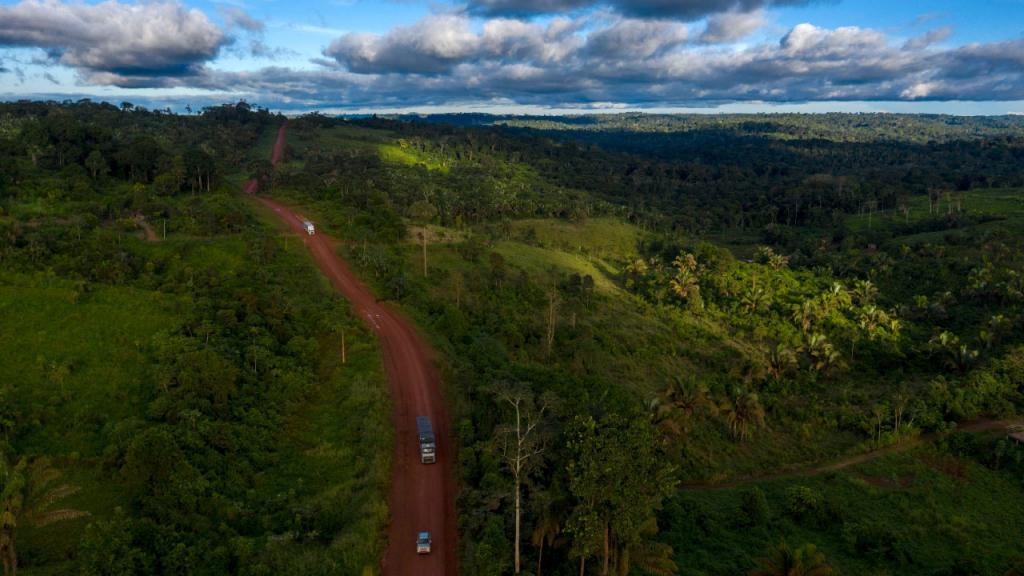 Paisaje con  una extensión de selva y en la mitad una carretera.